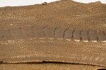 Straußenbein Leder
