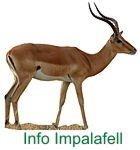 Impala Info