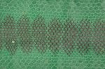 Seeschlange grün B Ware