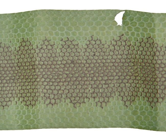 Seeschlange lindgrün B Ware