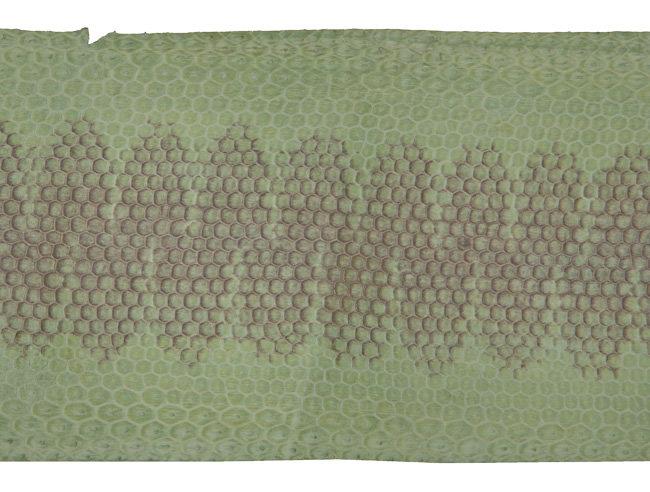 Seeschlange lindgrün