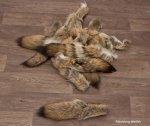 Kojotenschwanz 40cm