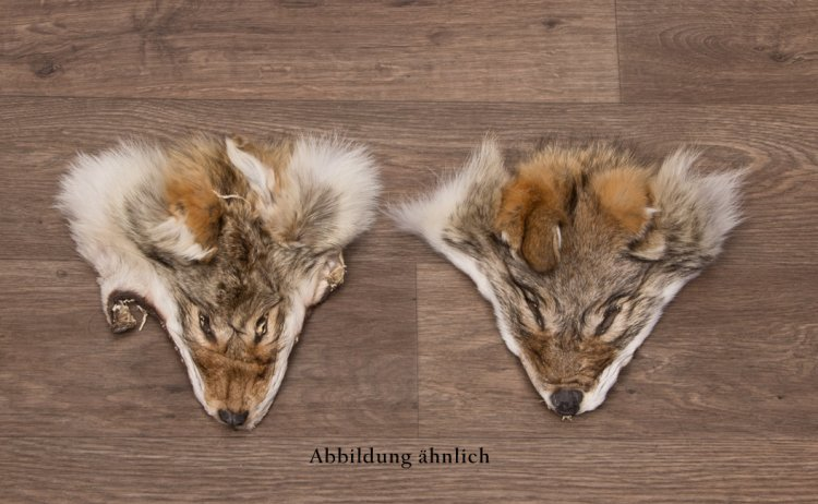 Kojotenkopffell