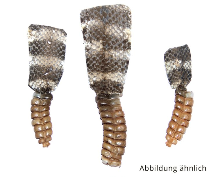 Klapperschlangen Rassel 4,5cm- 5,5cm