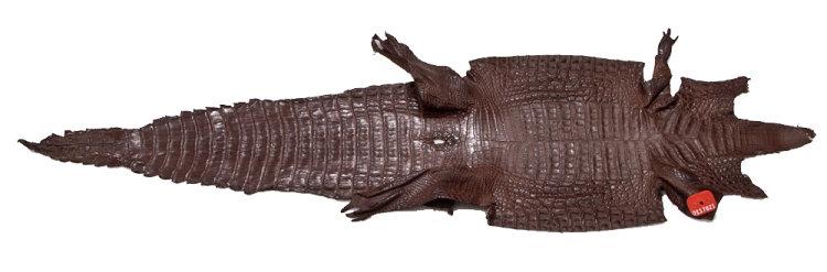 Caimanleder Rückenschnitt