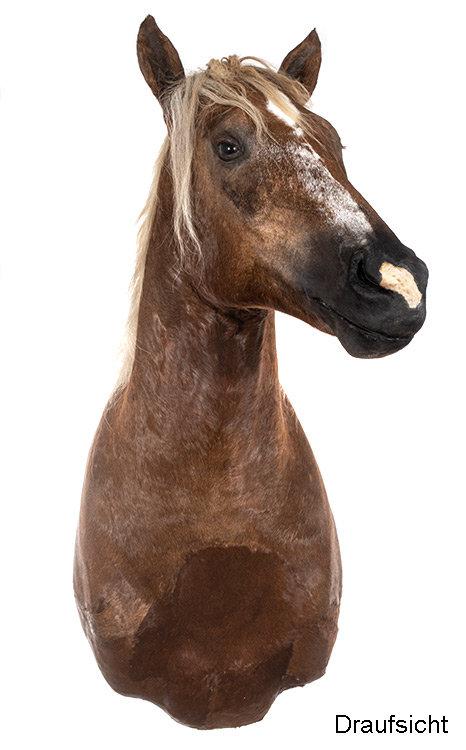 Pferde Haupt